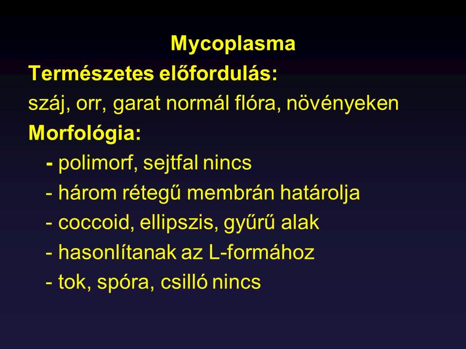 Mycoplasma Természetes előfordulás: száj, orr, garat normál flóra, növényeken. Morfológia: - polimorf, sejtfal nincs.