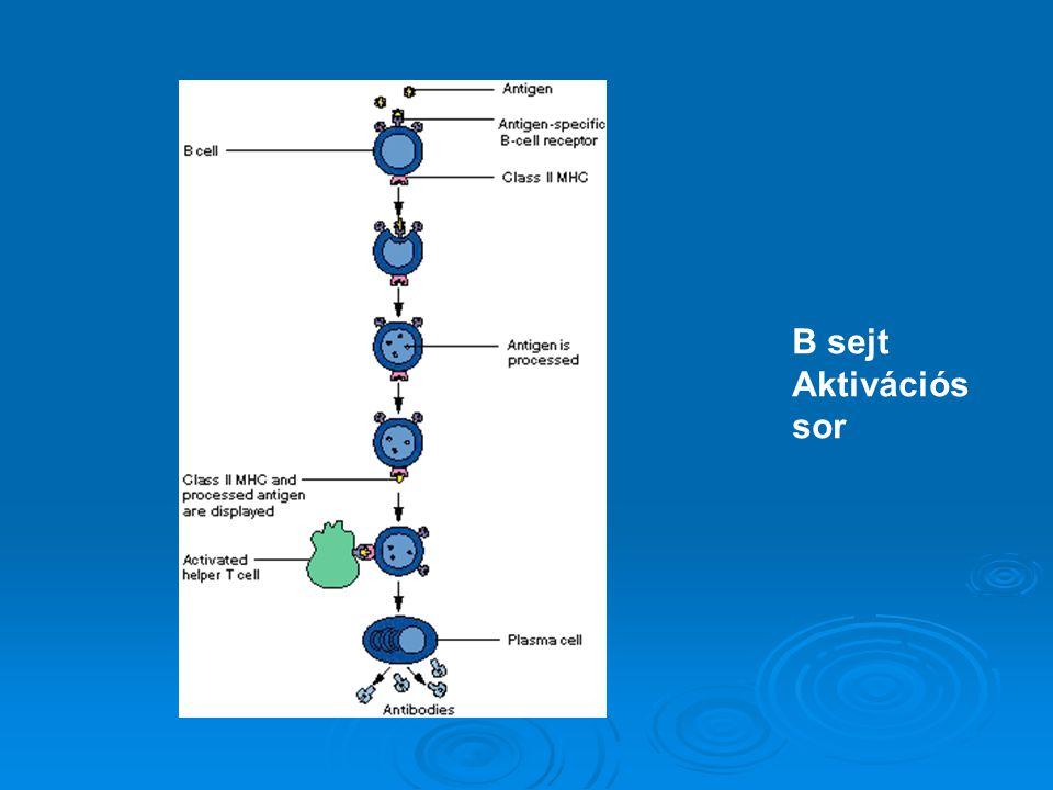 B sejt Aktivációs sor