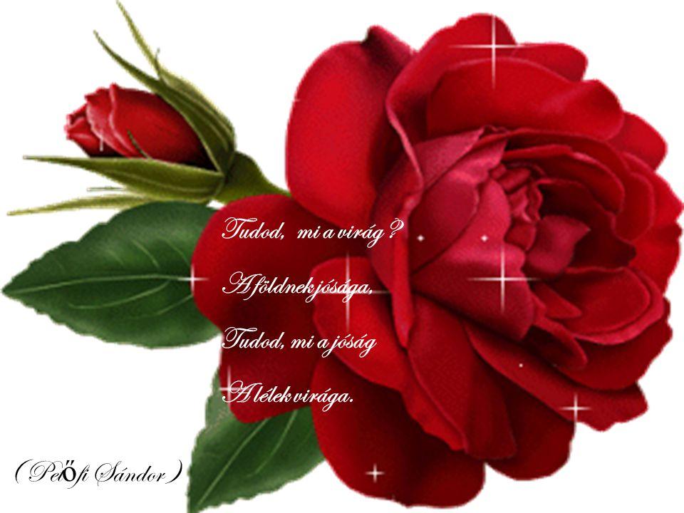 Tudod, mi a virág A földnek jósága, Tudod, mi a jóság A lélek virága. ( Petőfi Sándor )