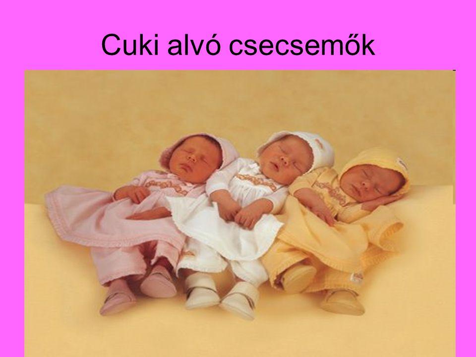 Cuki alvó csecsemők