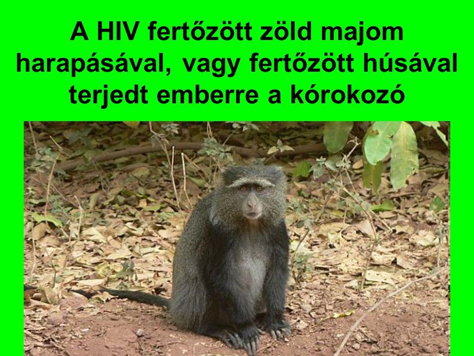 A HIV fertőzött zöld majom harapásával, vagy fertőzött húsával terjedt emberre a kórokozó