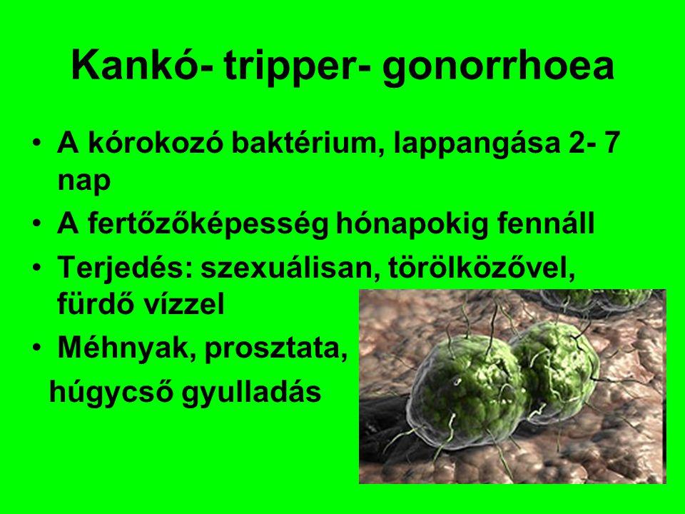 Kankó- tripper- gonorrhoea
