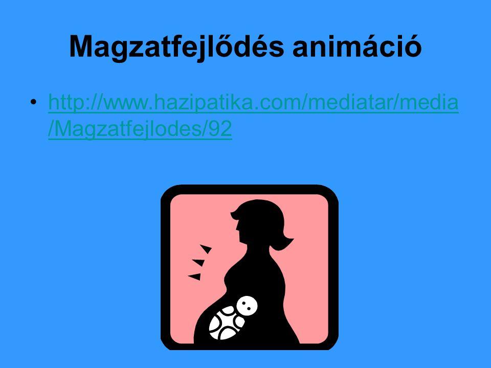 Magzatfejlődés animáció