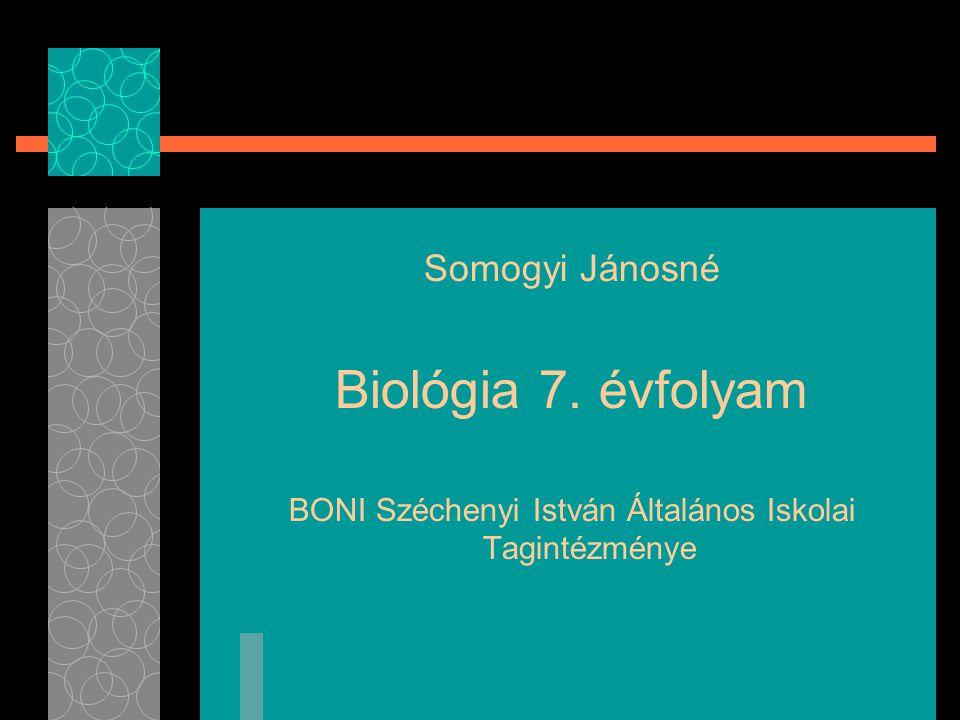 BONI Széchenyi István Általános Iskolai Tagintézménye