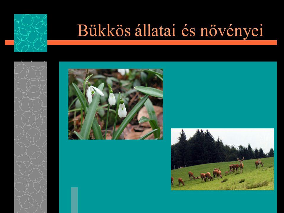 Bükkös állatai és növényei