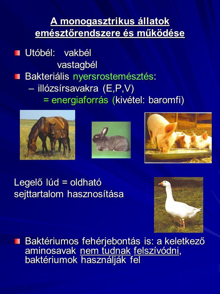 A monogasztrikus állatok emésztőrendszere és működése
