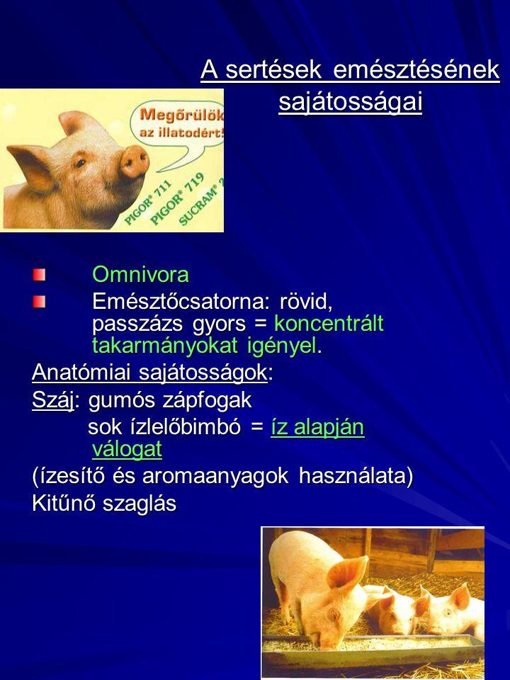 A sertések emésztésének sajátosságai