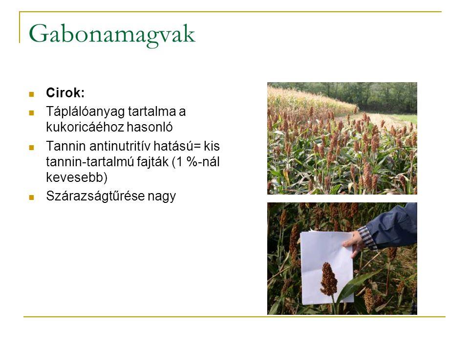 Gabonamagvak Cirok: Táplálóanyag tartalma a kukoricáéhoz hasonló