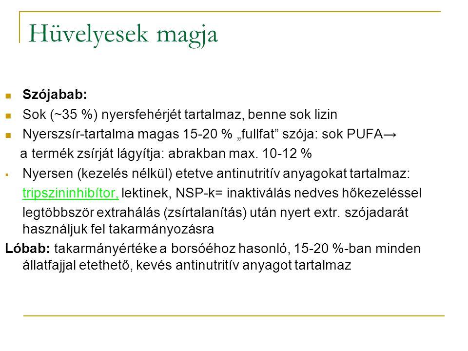 Hüvelyesek magja Szójabab:
