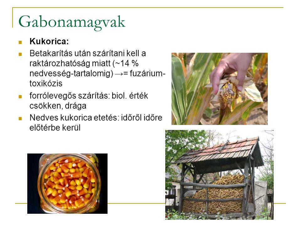 Gabonamagvak Kukorica: