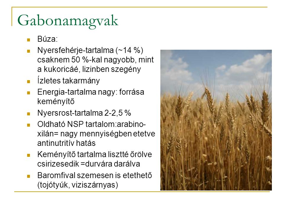 Gabonamagvak Búza: Nyersfehérje-tartalma (~14 %) csaknem 50 %-kal nagyobb, mint a kukoricáé, lizinben szegény.