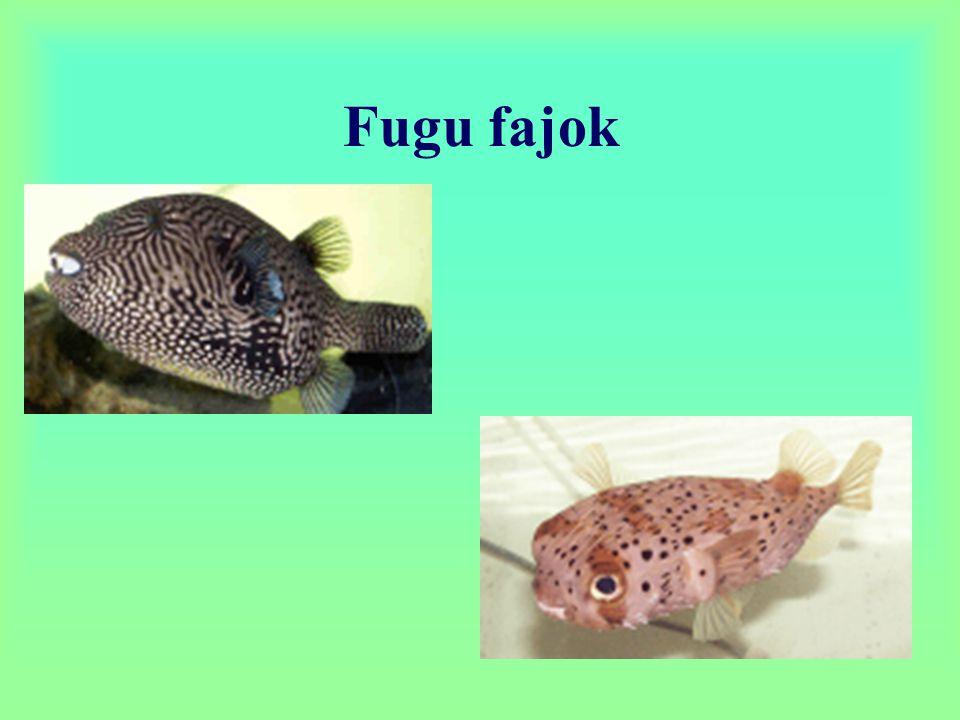 Fugu fajok