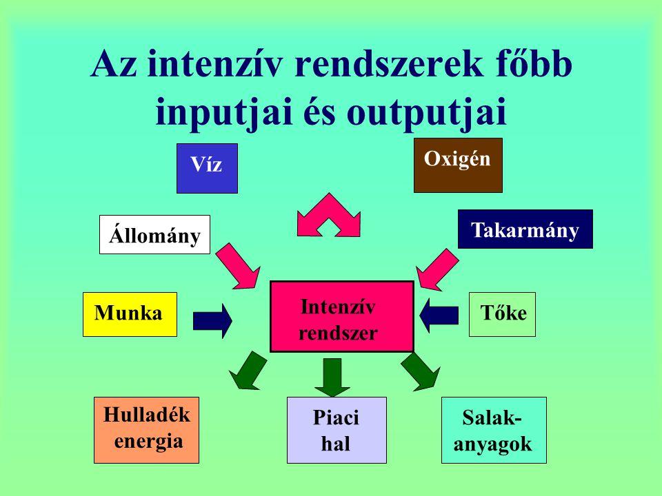 Az intenzív rendszerek főbb inputjai és outputjai