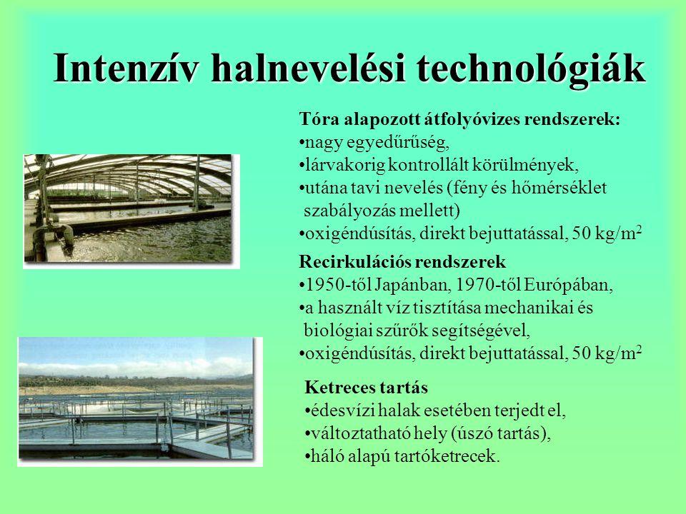 Intenzív halnevelési technológiák