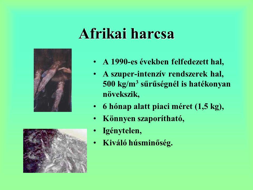Afrikai harcsa A 1990-es években felfedezett hal,
