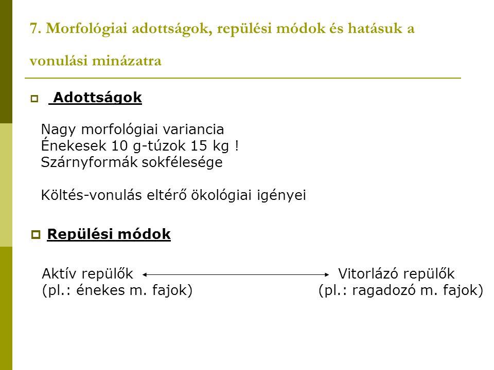 7. Morfológiai adottságok, repülési módok és hatásuk a vonulási minázatra