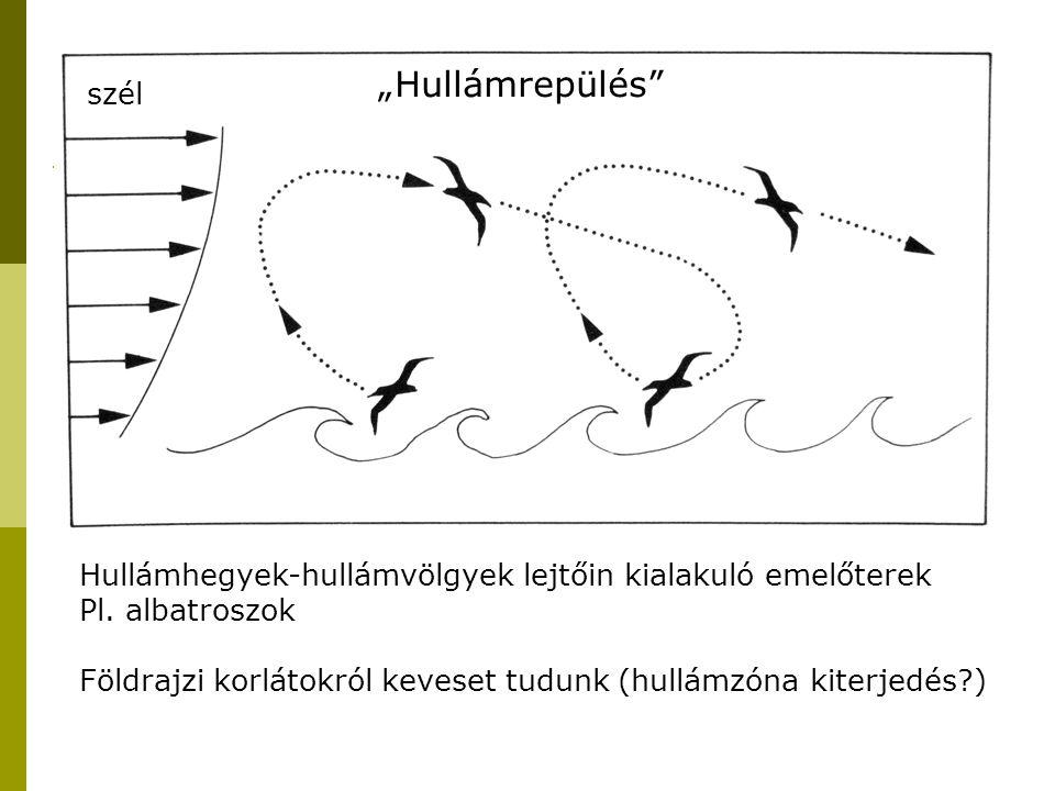 Morfológiai adottságok, repülési módok és hatásuk a vonulási minázatra