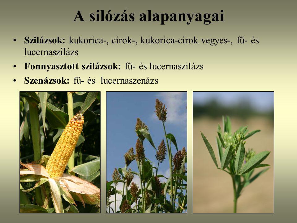 A silózás alapanyagai Szilázsok: kukorica-, cirok-, kukorica-cirok vegyes-, fű- és lucernaszilázs. Fonnyasztott szilázsok: fű- és lucernaszilázs.