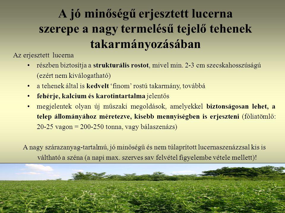 A jó minőségű erjesztett lucerna szerepe a nagy termelésű tejelő tehenek takarmányozásában