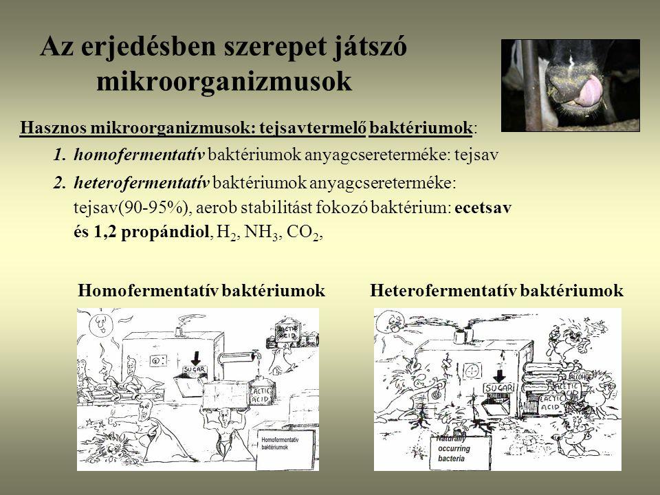 Az erjedésben szerepet játszó mikroorganizmusok