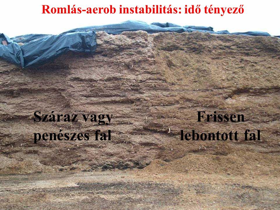 Száraz vagy penészes fal Frissen lebontott fal