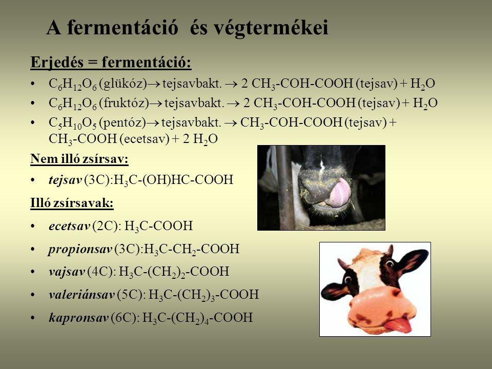 A fermentáció és végtermékei