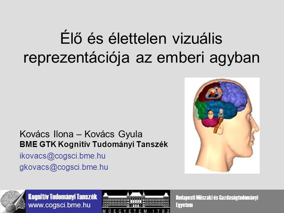 Élő és élettelen vizuális reprezentációja az emberi agyban