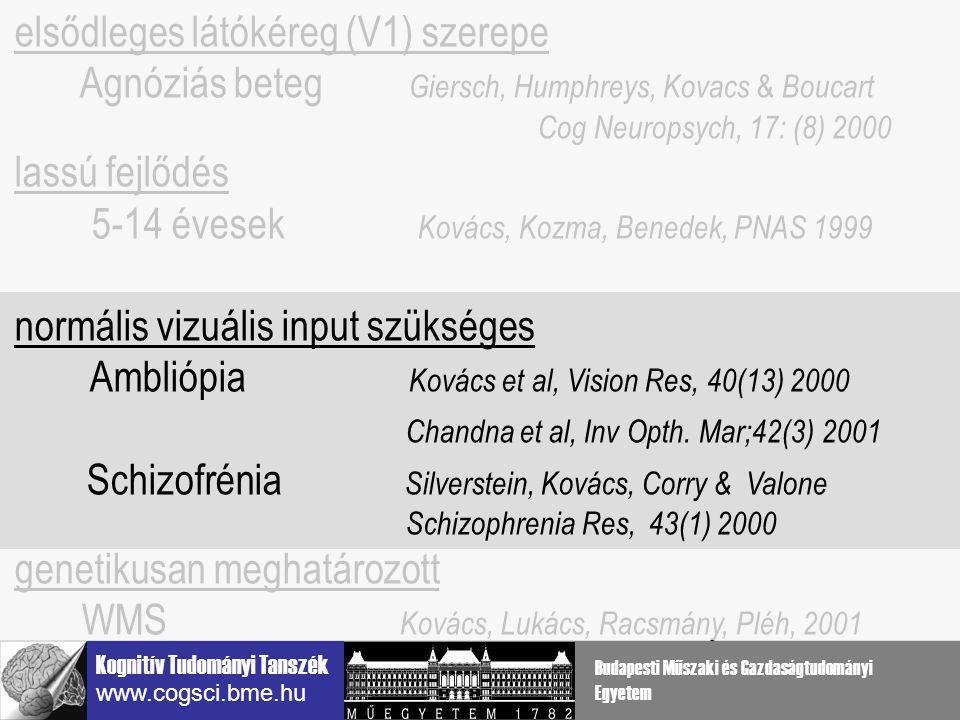 elsődleges látókéreg (V1) szerepe