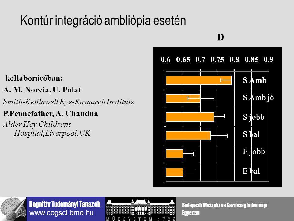 Kontúr integráció ambliópia esetén