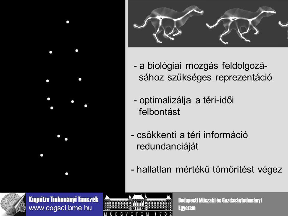 - a biológiai mozgás feldolgozá- sához szükséges reprezentáció - optimalizálja a téri-idői felbontást - csökkenti a téri információ redundanciáját - hallatlan mértékű tömöritést végez