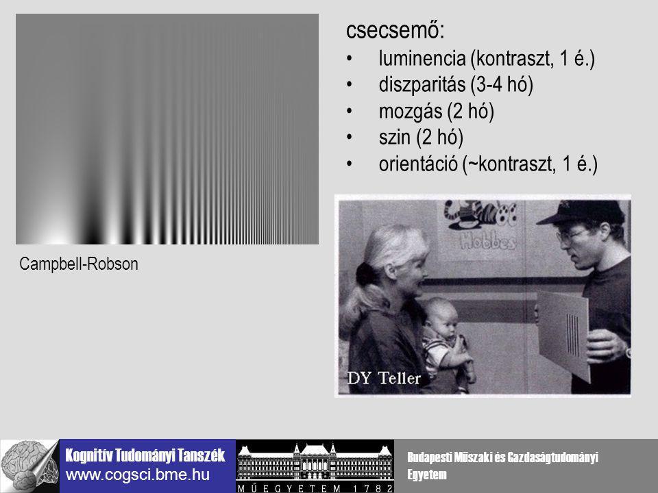 csecsemő: luminencia (kontraszt, 1 é.) diszparitás (3-4 hó)
