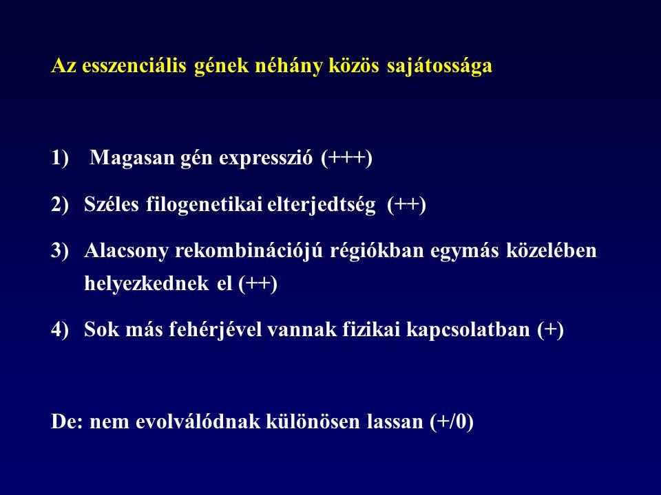 Az esszenciális gének néhány közös sajátossága