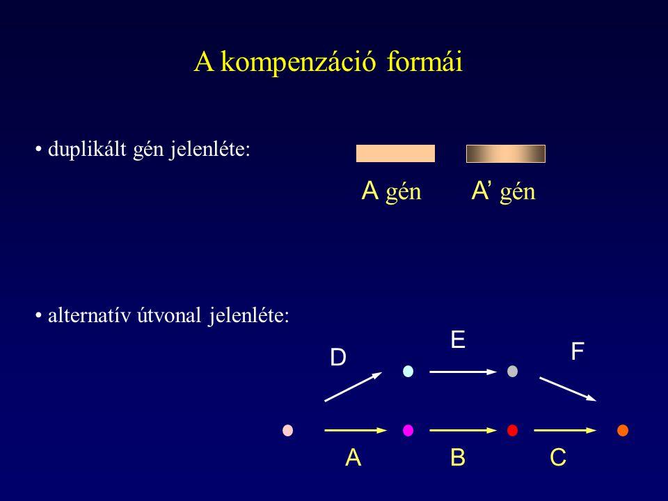 A kompenzáció formái A gén A' gén A B C D E F