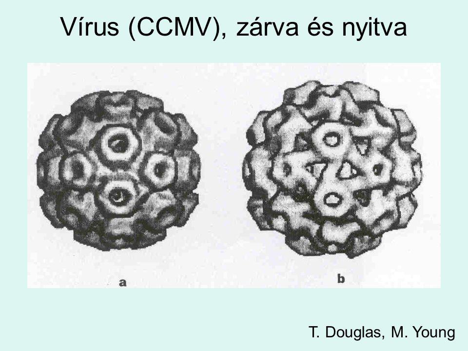Vírus (CCMV), zárva és nyitva