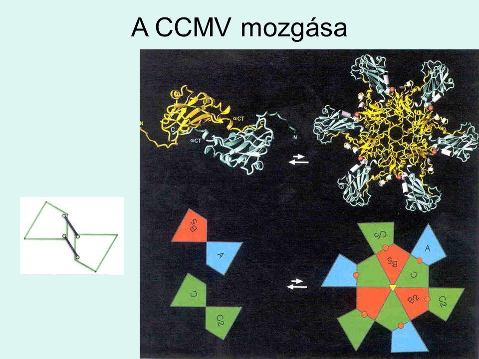 A CCMV mozgása