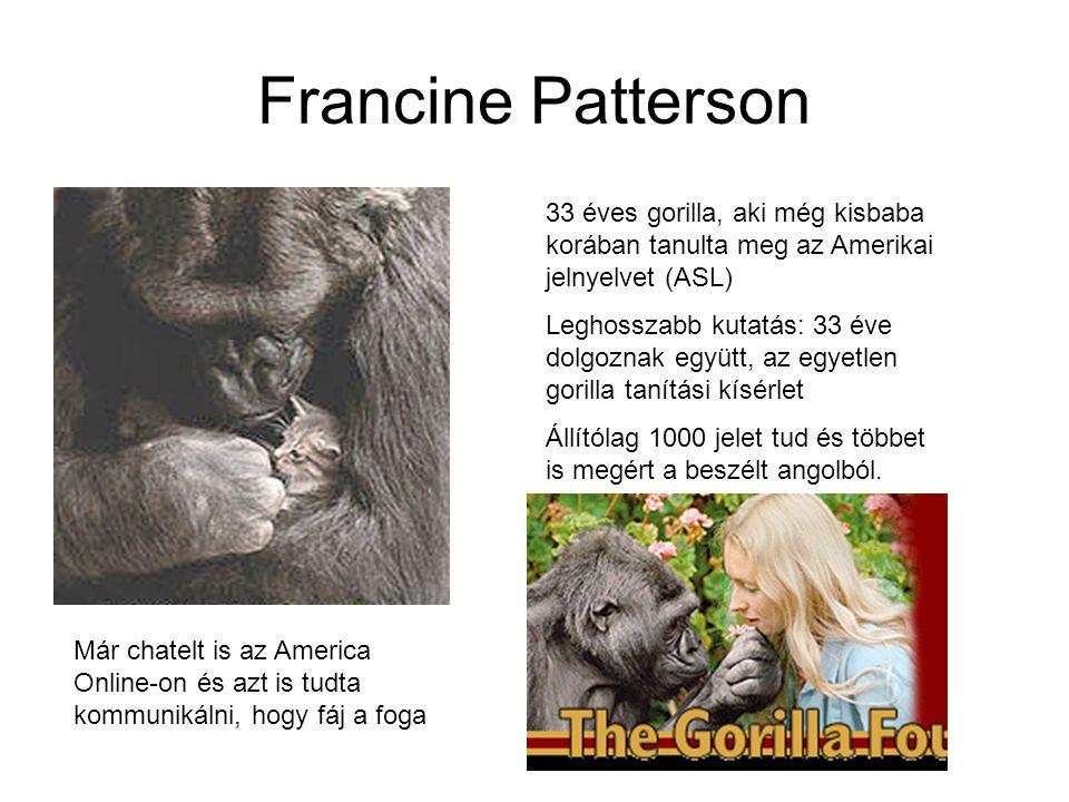 Francine Patterson 33 éves gorilla, aki még kisbaba korában tanulta meg az Amerikai jelnyelvet (ASL)