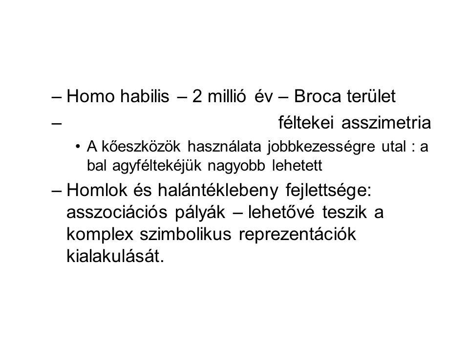 Homo habilis – 2 millió év – Broca terület féltekei asszimetria