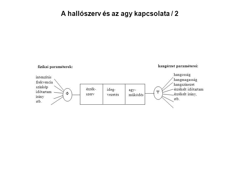 A hallószerv és az agy kapcsolata / 2