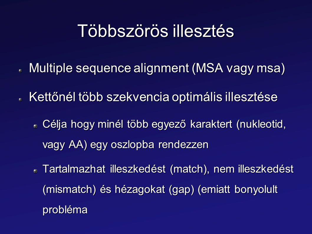 Többszörös illesztés Multiple sequence alignment (MSA vagy msa)