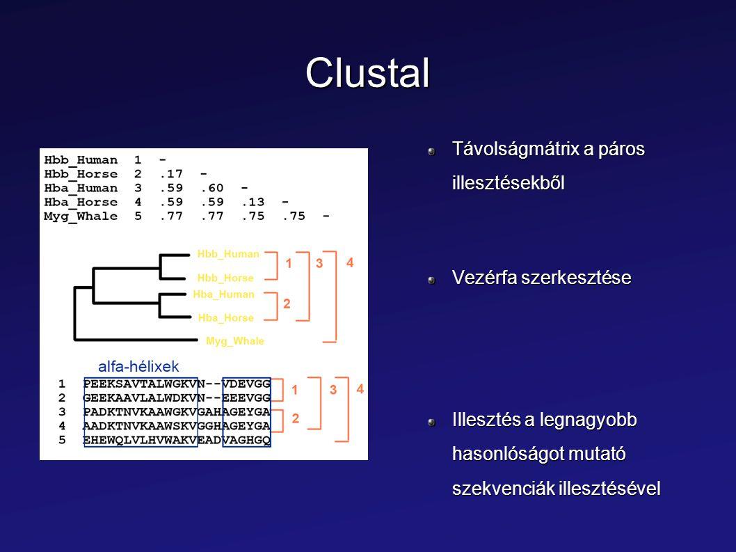 Clustal Távolságmátrix a páros illesztésekből Vezérfa szerkesztése