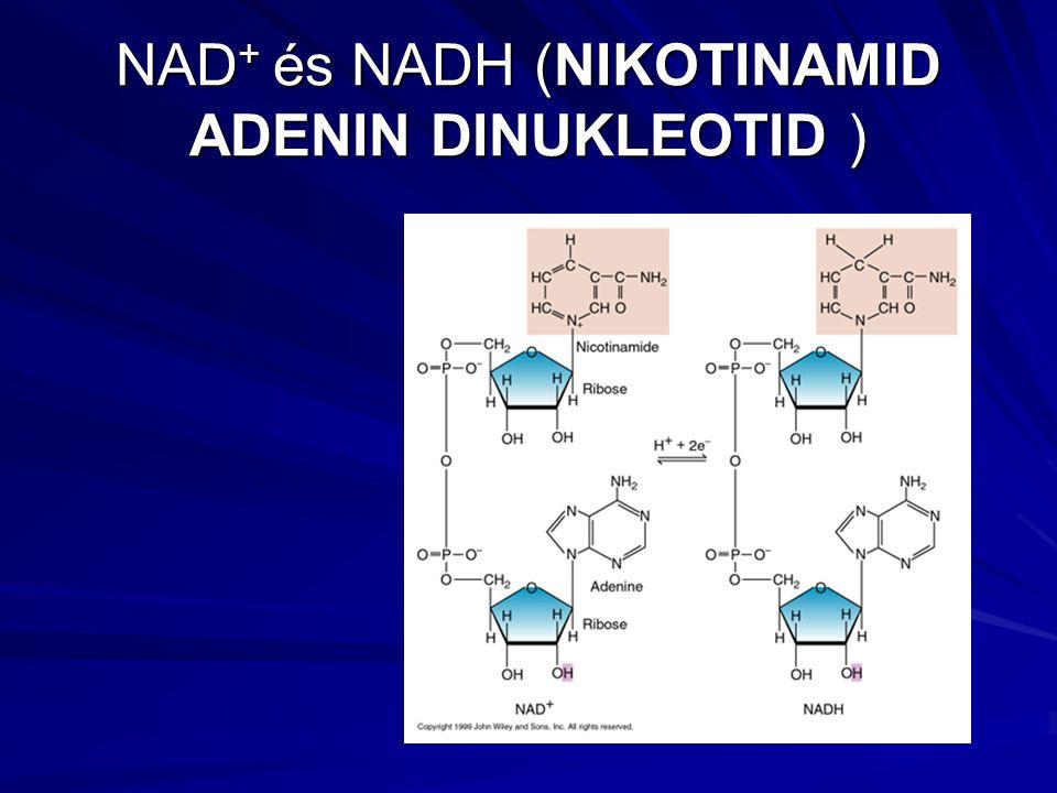 NAD+ és NADH (NIKOTINAMID ADENIN DINUKLEOTID )