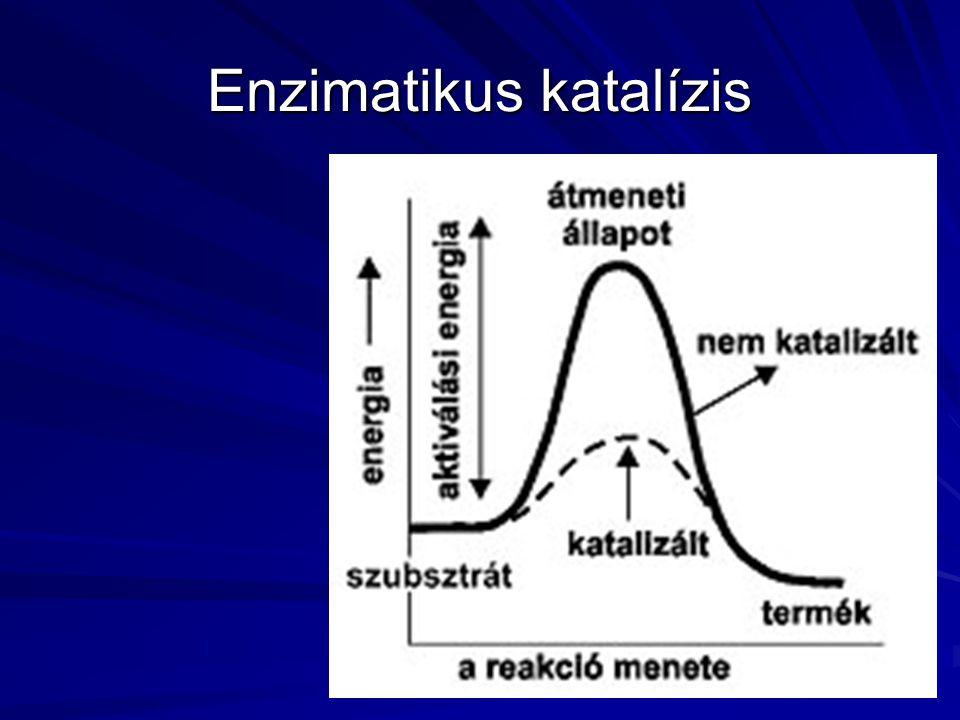 Enzimatikus katalízis