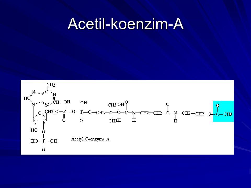 Acetil-koenzim-A
