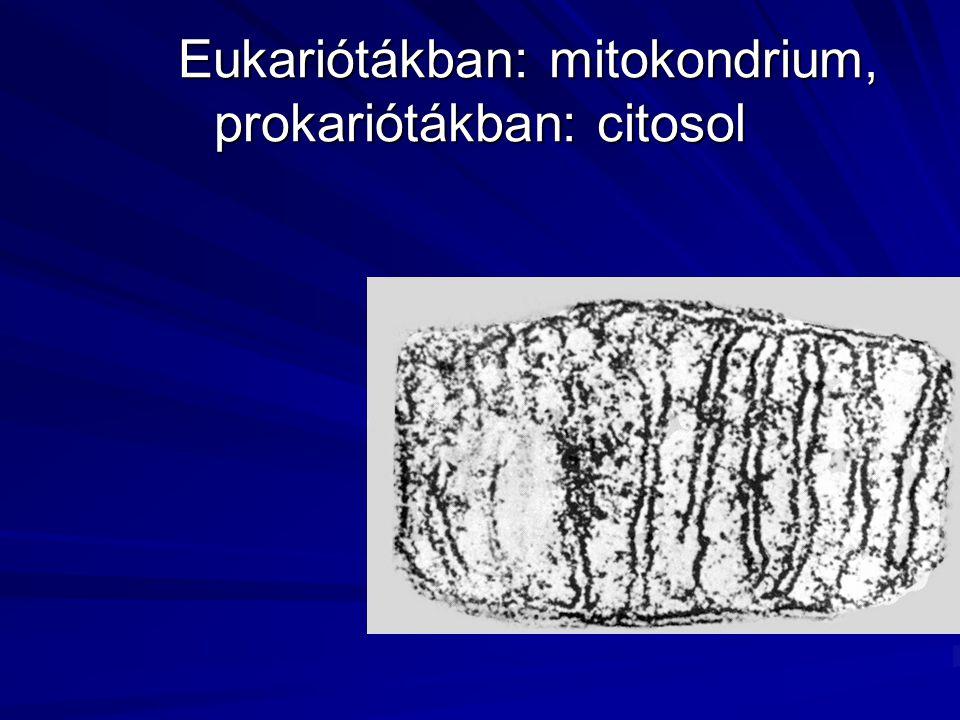 Eukariótákban: mitokondrium, prokariótákban: citosol