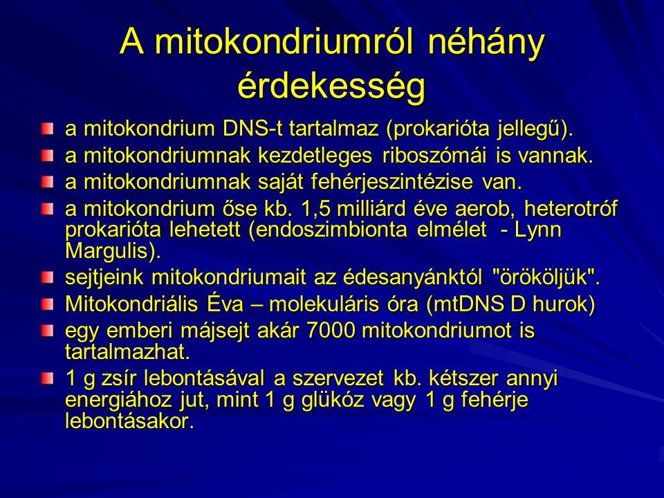 A mitokondriumról néhány érdekesség