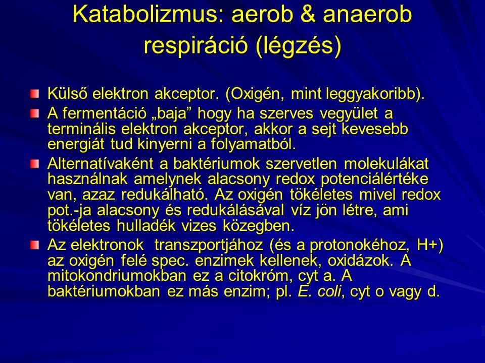 Katabolizmus: aerob & anaerob respiráció (légzés)