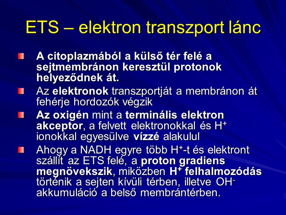 ETS – elektron transzport lánc