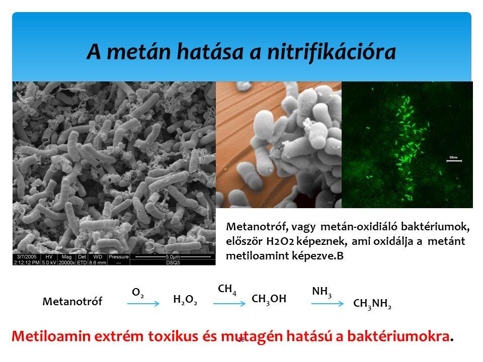 A metán hatása a nitrifikációra