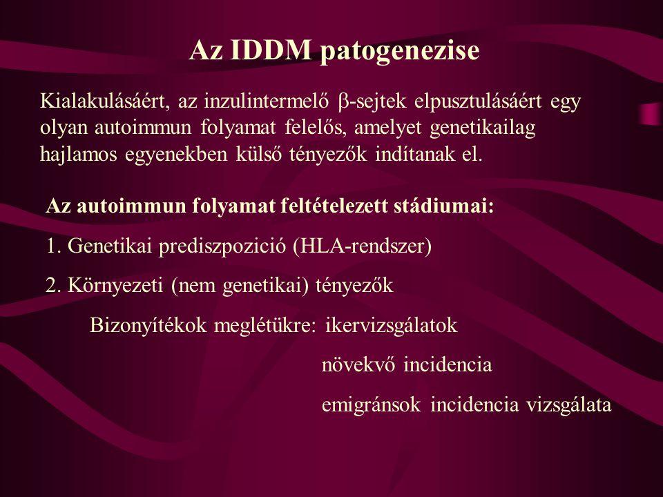 Az IDDM patogenezise