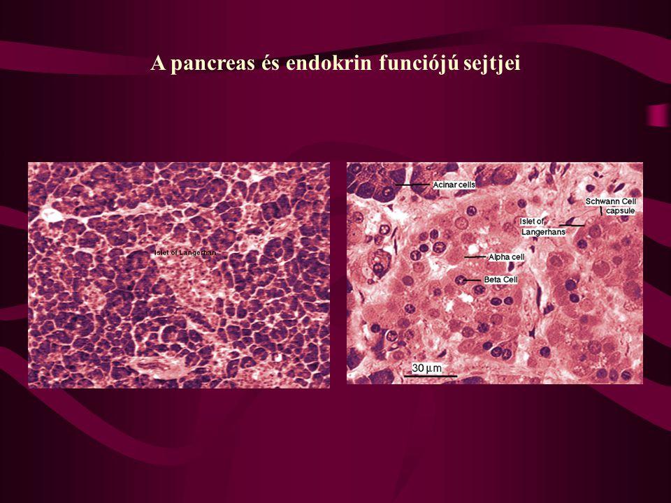 A pancreas és endokrin funciójú sejtjei